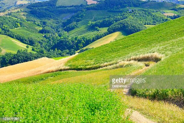 曲がりくねったトレイルで静かな環境 - 休耕田 ストックフォトと画像