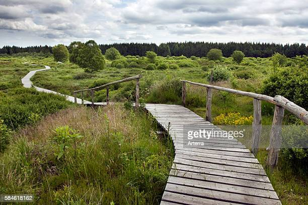 Winding wooden boardwalk in moorland at the High Fens / Hautes Fagnes nature reserve in the Belgian Ardennes Belgium