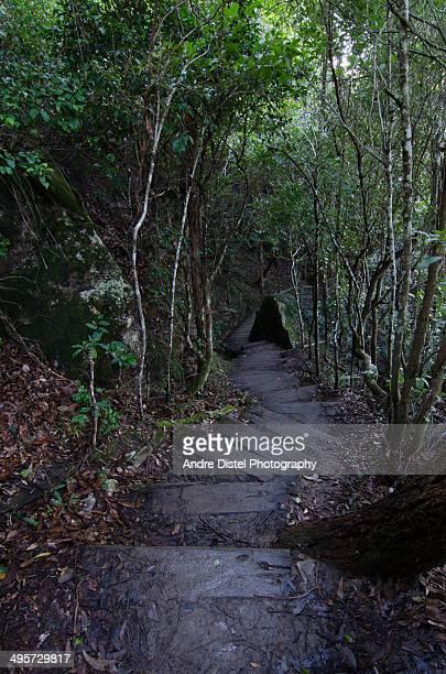 Winding wooden steps in Australian forest