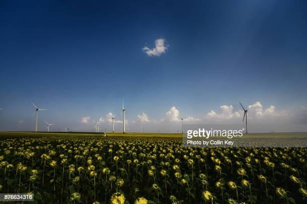 windkrafträder über sonnenblumen - collin key stock-fotos und bilder