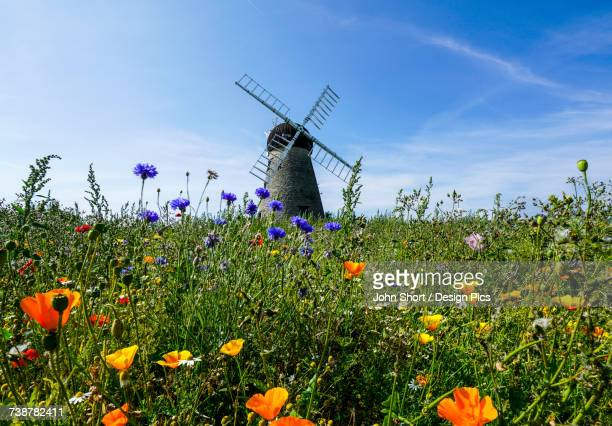 A windmill against a blue sky and cloud with a field of wildflowers in the foreground