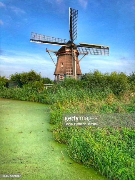 windmill and canal in haarlem, rhe netherlands - haarlem stock photos and pictures
