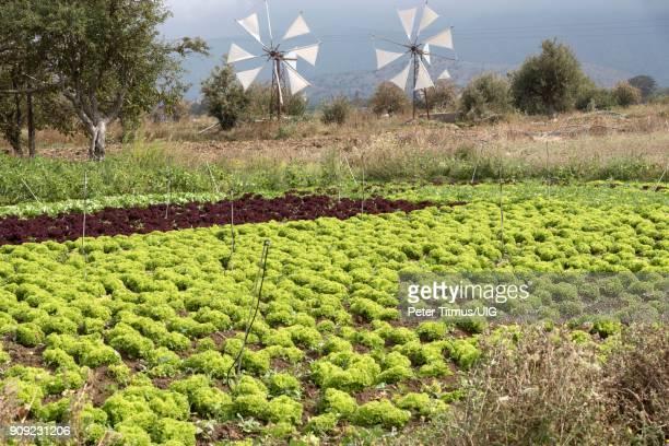 windmill and mountains crete, greece. - altopiano foto e immagini stock