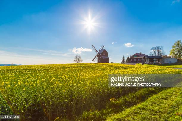 windmill and rape field - uttar pradesh stock pictures, royalty-free photos & images