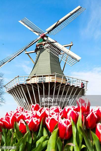 bâtiment actionné par le vent et tulipes - jardins de keukenhof photos et images de collection