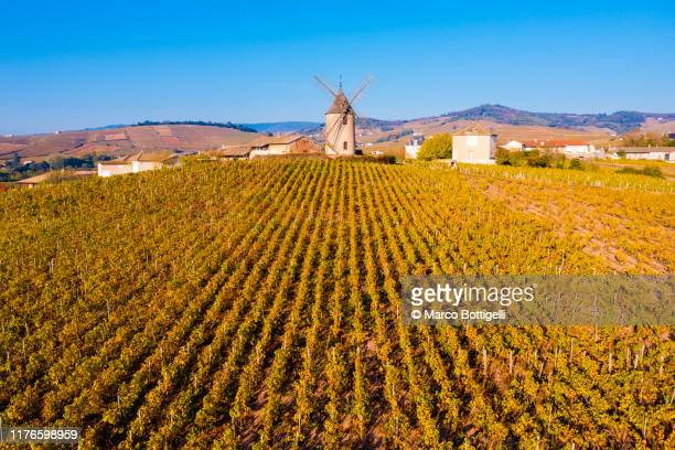 windmill and vineyards at chenas, france - rhone stock pictures, royalty-free photos & images