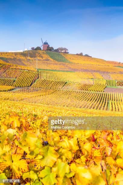 windmill and vineyards, verzenay, champagne ardenne, france - マルヌ県 ストックフォトと画像