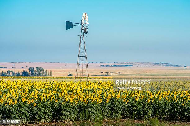 Windmill in a field of flowers