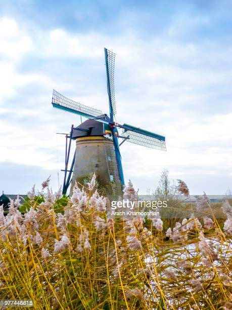 windmill in field, kinderdijk, holland - キンデルダイク ストックフォトと画像