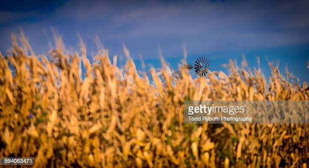 windmill in the corn - american style windmill stock pictures, royalty-free photos & images