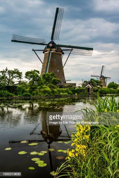 windmill reflection and irises - キンデルダイク ストックフォトと画像