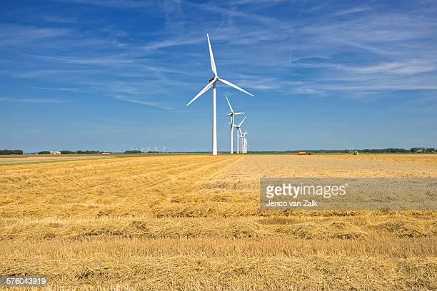windmills and wheat - biddingshuizen stockfoto's en -beelden