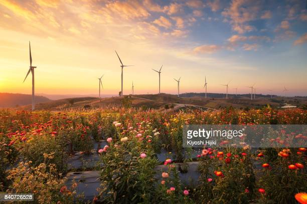 Windmills for electric power production on hill in Phetchabun province, Thailand