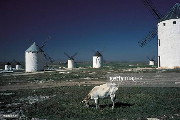 Windmills of La Mancha Campo de Criptana Ciudad Real View of the traditional windmills of La Mancha immortalized by Cervantes in their novel Don...