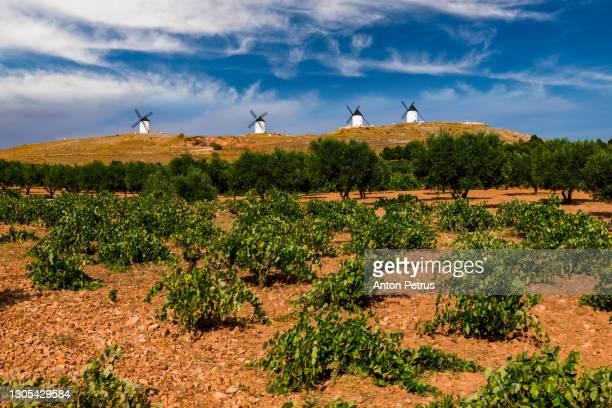 windmills on hill with a vineyard in consuegra, mancha, spain - castilla la mancha fotografías e imágenes de stock