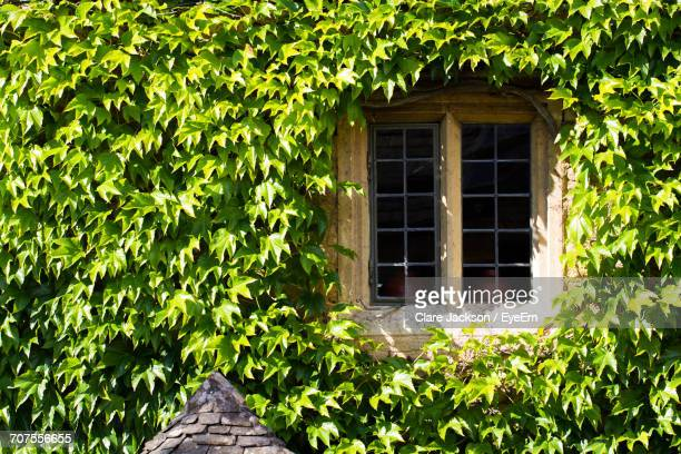 Window Amidst Ivy On House
