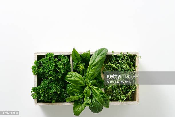 Window box of growing salad leaves