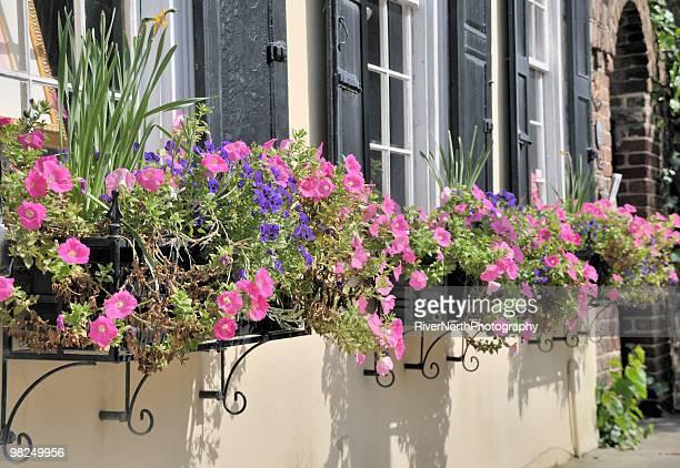 Window Boxes, Charleston, South Carolina