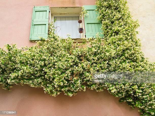 Fenster verdeckt mit Jasmin
