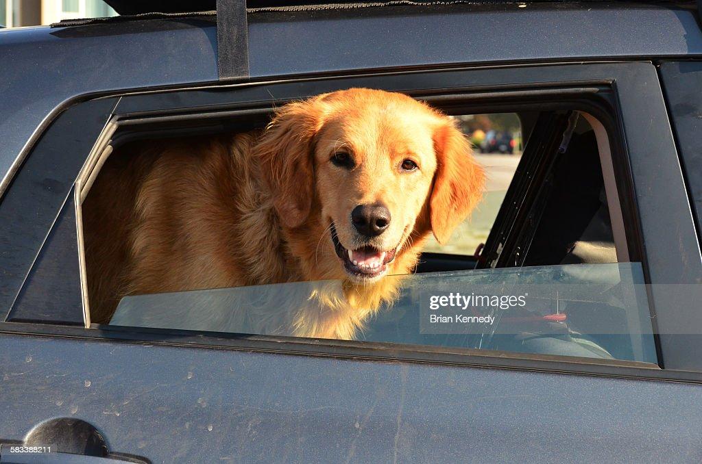 Window dog : Stock Photo