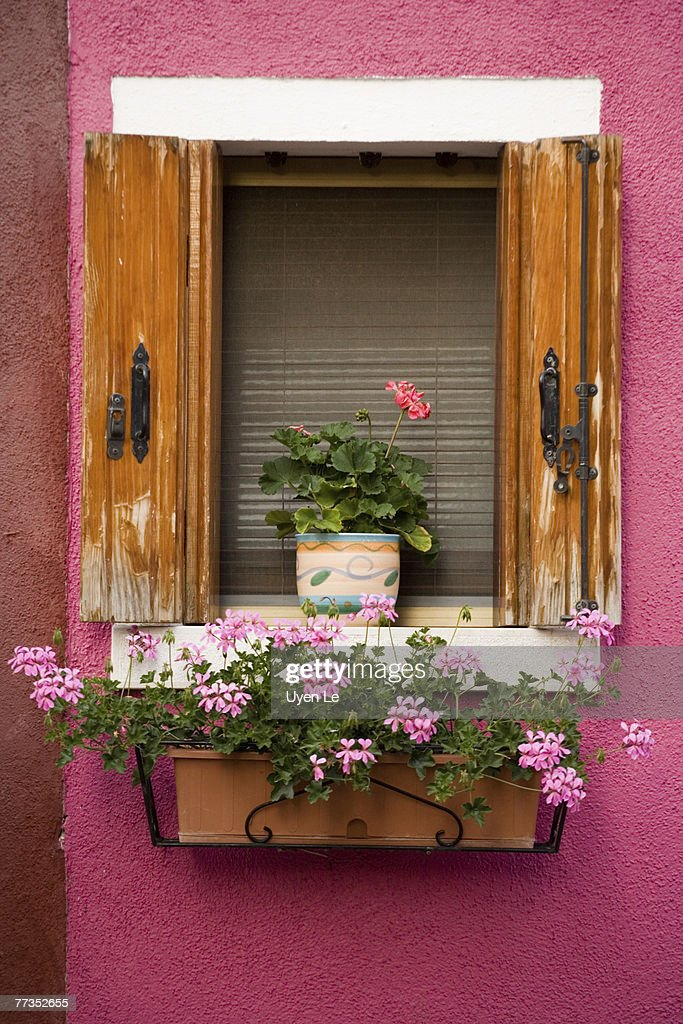 A window on a colorful pink house in Burano : Photo