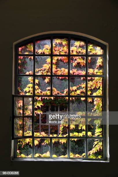 window on autumn - liborio pepi stock-fotos und bilder