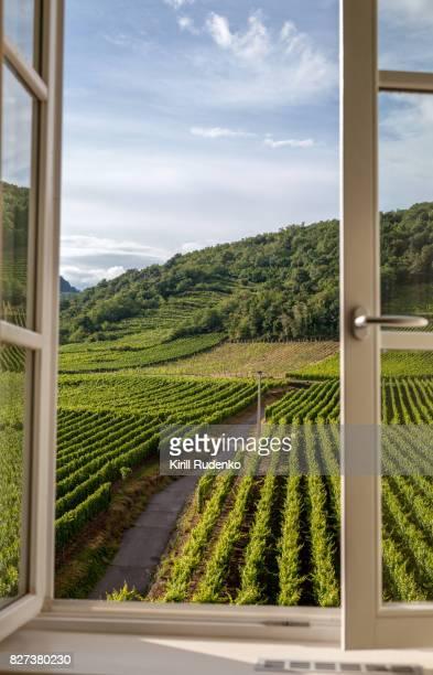 Window overlooking a vineyard
