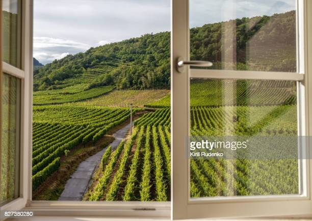 Window overlooking a vineyard