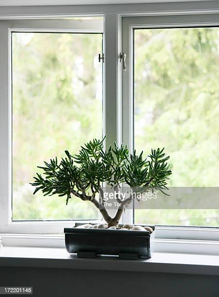 window plant - feng shui stock photos and pictures