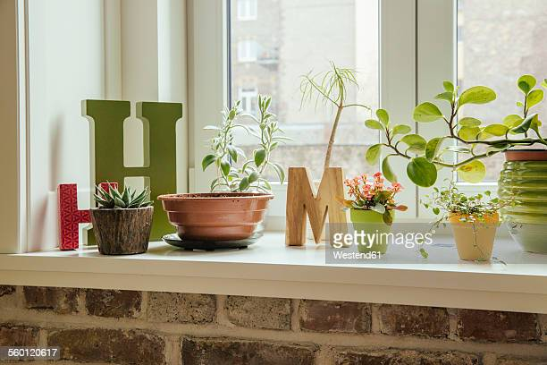 Window sill with plants and letters H and M