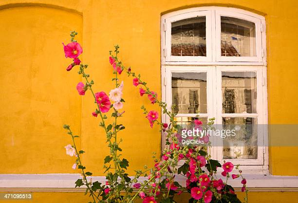 window with hollyhock - hollyhock stock pictures, royalty-free photos & images