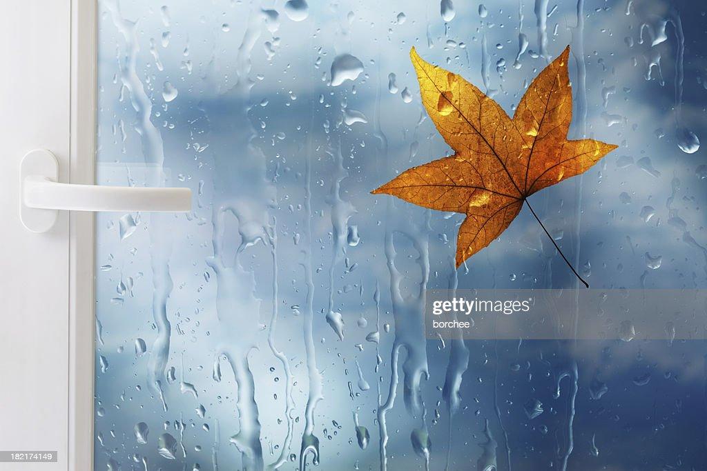 ウィンドウにリーフと Raindrops : ストックフォト