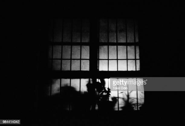 window with plants, beijing - 間 ストックフォトと画像