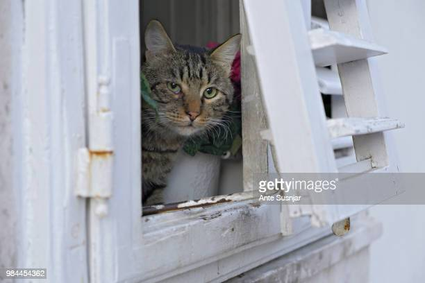 A windowed cat