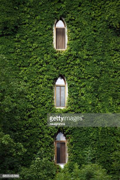 Windows over ivy wall