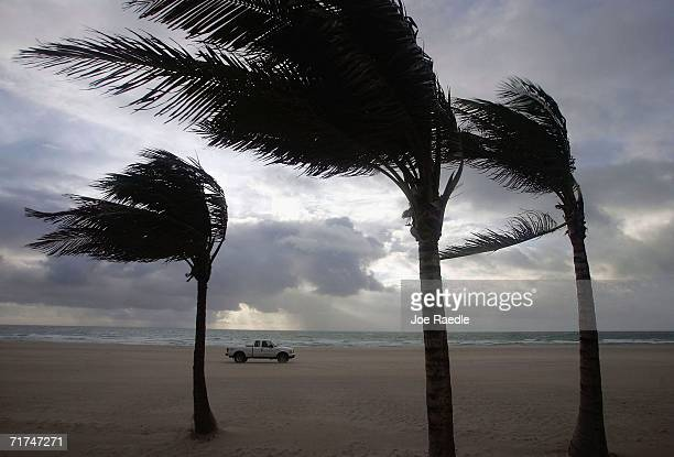 Winds blow through the palm trees as the remains of Tropical Storm Ernesto pass through August 30 2006 in Miami Beach Florida So far the storm has...