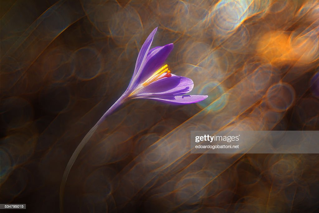 Wind's flower : Stock Photo
