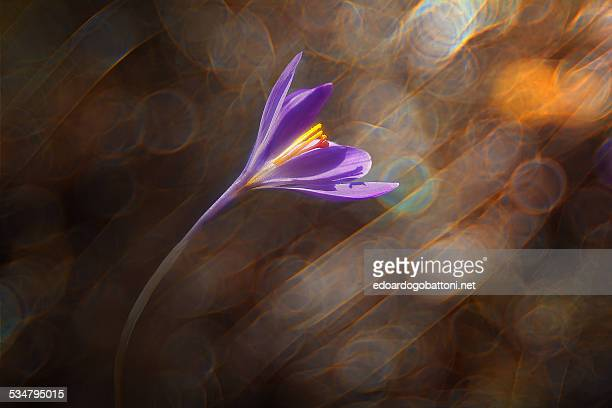 wind's flower - edoardogobattoni - fotografias e filmes do acervo