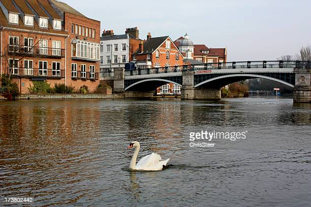 windsor and eton riverside - windsor england stock pictures, royalty-free photos & images