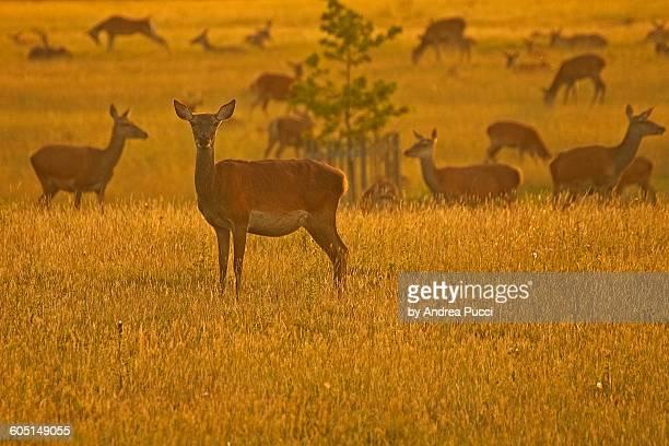Windsor Great Park, Berkshire, United Kingdom