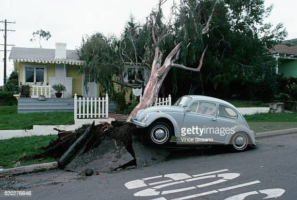 Windstorm Uprooted Tree in California
