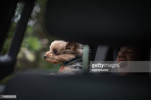Windswept dog and girl in a moving car