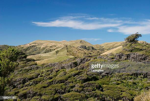 windswept kanuka bush & green rolling hills - uncultivated stock pictures, royalty-free photos & images