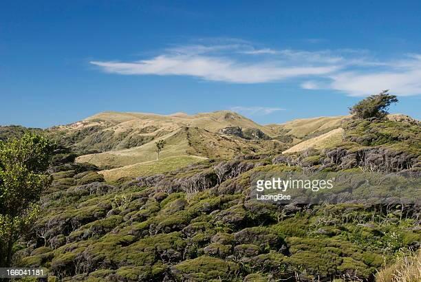 windswept kanuka bush & green rolling hills - manuka stock photos and pictures