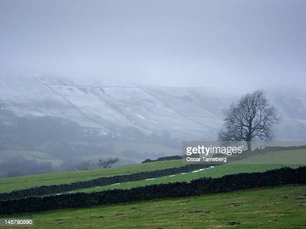 Windswept tree against snow covered hills
