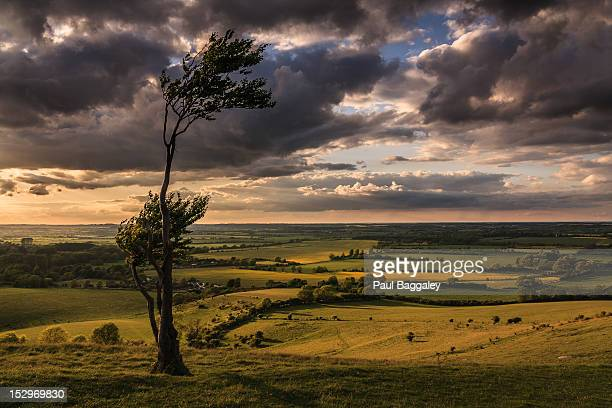 windswept tree - hertfordshire stock pictures, royalty-free photos & images
