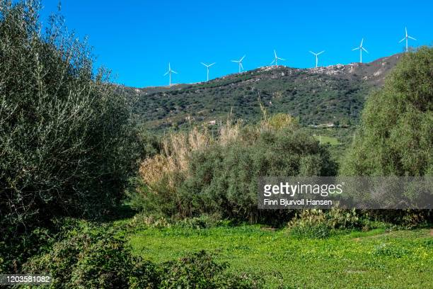 windturbines on a mountain top with beautiful yellow flowers in the foreground - finn bjurvoll stockfoto's en -beelden
