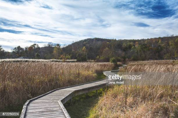 Windy Appalachian Trail Boardwalk
