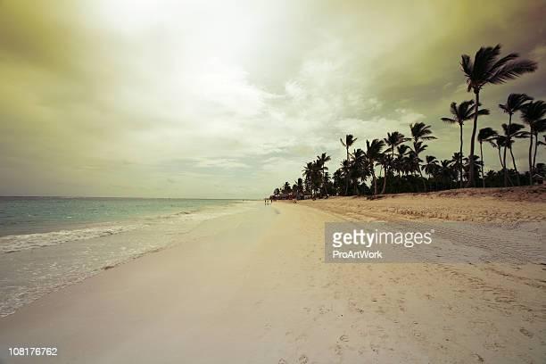 Windy Beach Scene at Dawn