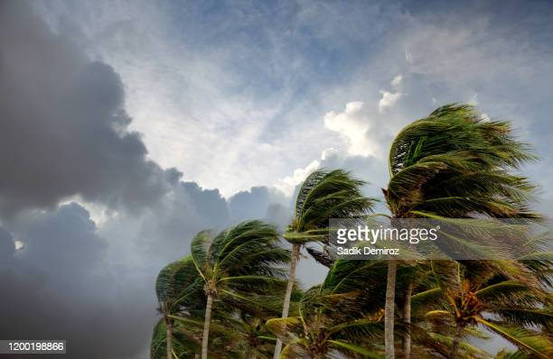 windy storm day and waving palm trees - costa del golfo degli stati uniti d'america foto e immagini stock